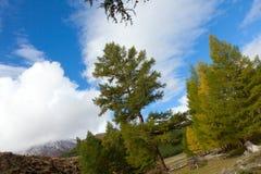 Mountain Siberian taiga Royalty Free Stock Photo
