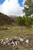 Mountain Siberian taiga Stock Image
