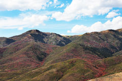 Mountain Side Forest Fall Colors. Beautiful mountain forest turning into autumn colors Stock Photo