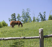 Mountain side horse meadow Royalty Free Stock Photography