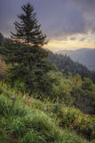 Mountain Side. Morning view over the side of a mountain in Great Smoky Mountain National Park Stock Photo