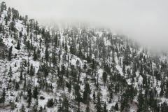 Mountain Side, Snow, Pine Trees, Fog royalty free stock image