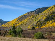 Autumn Gold in the San Juan Mountains. The mountain sides of Colorado near Silverton turn a beautiful golden yellow in the fall royalty free stock photography