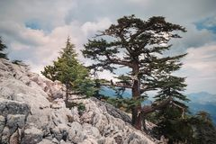 Mountain sides of Tahtali. Landscape of lycian way. Wild nature as it is covering mountain sides of Tahtali, Turkey Stock Photography