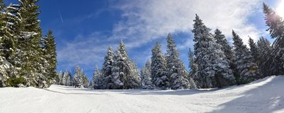 Mountain ski slope through white forest Stock Photography