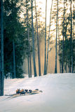 Mountain skis at sunset in snowy forest Royalty Free Stock Image