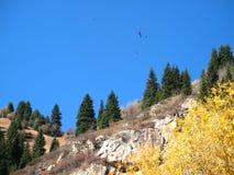 Mountain, sky, trees Royalty Free Stock Photo