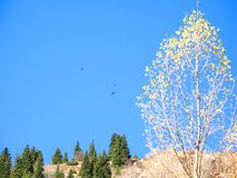 Mountain, sky, trees Royalty Free Stock Images