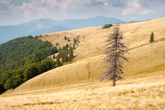 Mountain slope Royalty Free Stock Photo
