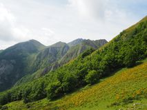 Mountain slope covered by a forest stock images