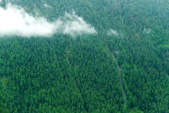 Mountain slope firs Royalty Free Stock Photo