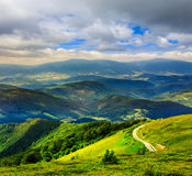 Mountain slope with forest in summer Royalty Free Stock Images