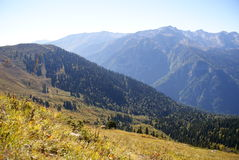 Mountain slope, forested, Abkhazia Royalty Free Stock Image