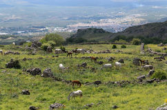 Mountain slope with horse in the corral Stock Photos