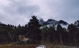 Mountain slope in lying cloud with the evergreen conifers shrouded in mist in a scenic landscape view Stock Photos