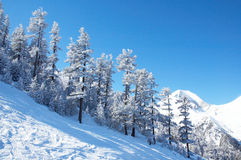 Mountain slope and winter forest Stock Images