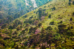 Mountain slopes Royalty Free Stock Images