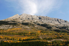Mountain slopes with forests royalty free stock photography