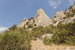 Mountain slopes and tops,which grows juniper Royalty Free Stock Images