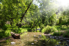 Mountain small river in forest royalty free stock images