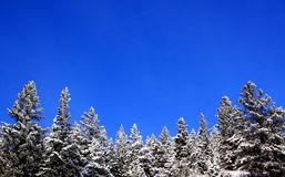 Mountain Snow. Winter scenic Stock Images