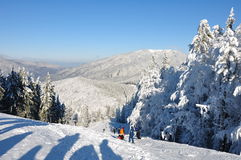 Mountain snow. Snow covered forests of fir trees in mid winter. Behind them there is a mountain ridge with another one far into the horizon. Above it there's a Stock Photo