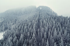 Mountain snow-covered forest captured from above with a drone Royalty Free Stock Images