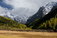 Mountain with snow and pine forest in autumn Stock Images