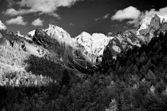 Mountain with snow and pine forest in black and white Royalty Free Stock Photo