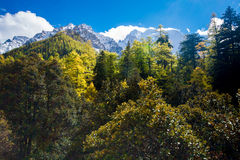 Mountain with snow and pine forest in a sunshine day of autumn Stock Photos