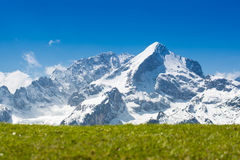 Mountain snow top with green pasture Royalty Free Stock Image