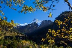 Mountain snow with tree frame Stock Photo