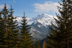 Mountain snowy landscape with pine trees Royalty Free Stock Images