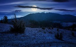 Mountain with snowy peak in springtime at night. In full moon light. forested hillsides with weathered grass royalty free stock photography