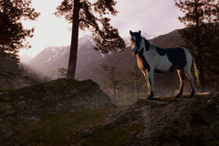Mountain Splendor. A proud looking paint stallion stands in the warm evening sunlight on a rocky bluff overlooking the Rocky Mountains of northern Montana Royalty Free Stock Images