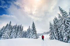 Mountain sport turist forest winter. Mountain sport turist in forest with winter sky Royalty Free Stock Images