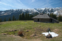 Mountain spring. Isolated old chalet in romanian Carpathian  mountains Stock Image