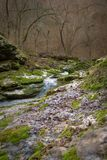 Mountain spring in the forest Stock Images