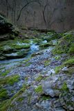 Mountain spring in the forest Stock Photography