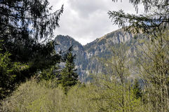 Mountain spring Royalty Free Stock Images