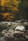 Mountain spring/river during autumn Stock Images