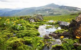 Mountain spring water flowing with green moss vegetation and yel Royalty Free Stock Photo