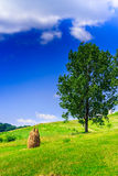 Mountain Stack of hay with trees vertical. Stack of hay in the mountains on a mountain meadow with trees vertical Royalty Free Stock Photo
