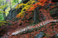 Mountain Stairs in Autumn Stock Photos
