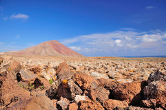 Mountain in the stone desert Stock Image