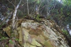 Mountain stone forest tree nature Stock Photos