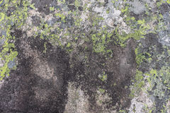 Mountain stone of gray and green and yellow flowers Royalty Free Stock Photography