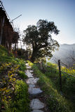 The mountain stone path Stock Photography