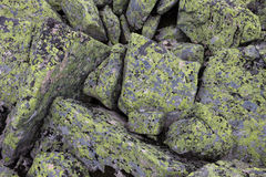 Mountain stones of gray and green and yellow flowers on the rock Royalty Free Stock Photos