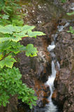 Mountain stream. In a forest water is blurred royalty free stock photo